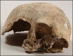 Photo of prehistoric skull